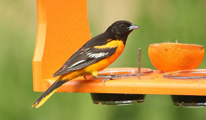best oriole feeder with bee guard