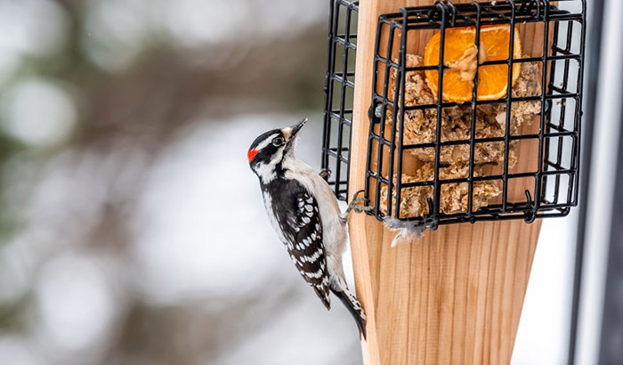 best woodpecker feeder