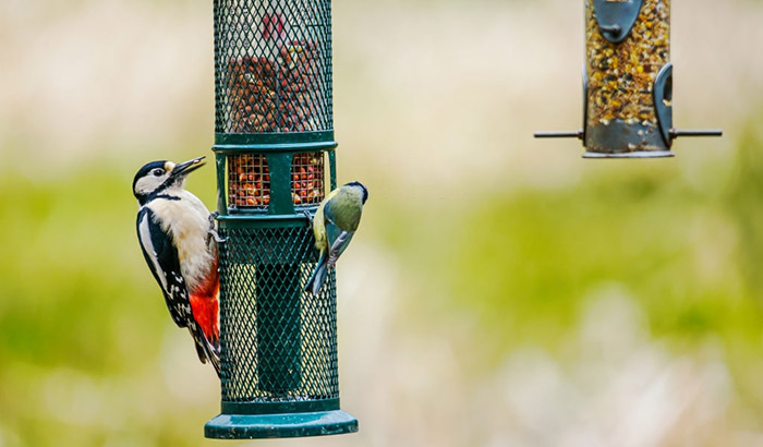 squirrel proof woodpecker feeder