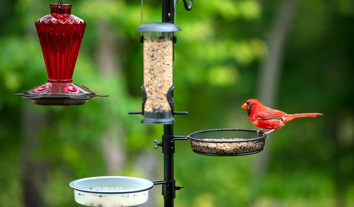 best cardinal bird feeder