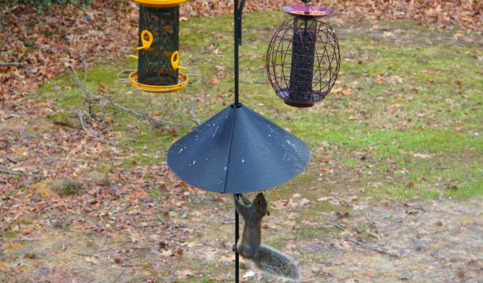 best bird feeder pole system