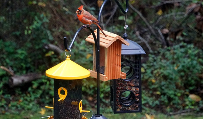 heavy duty bird feeding station