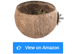 andwe squirrels coconut bowl feeders