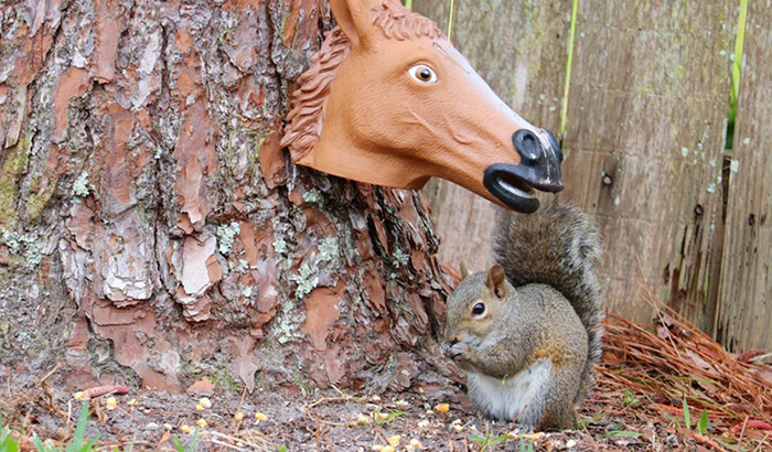 entertaining squirrel feeder